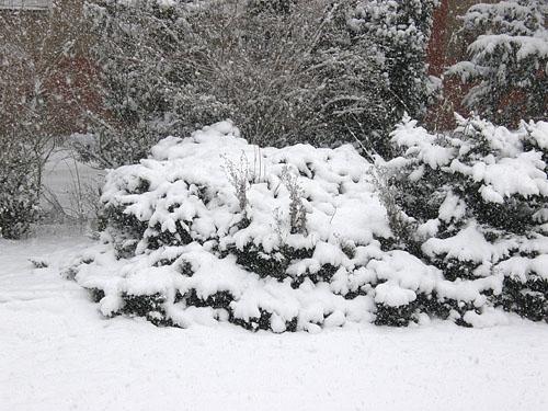 náročná zima 2009-10